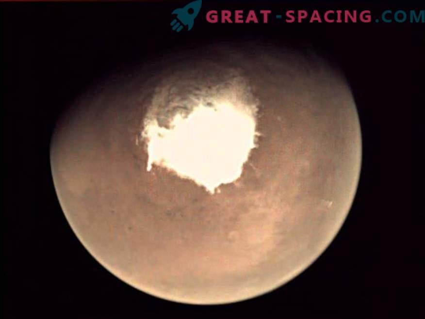 What terrestrial organism can hide in salty Martian water?