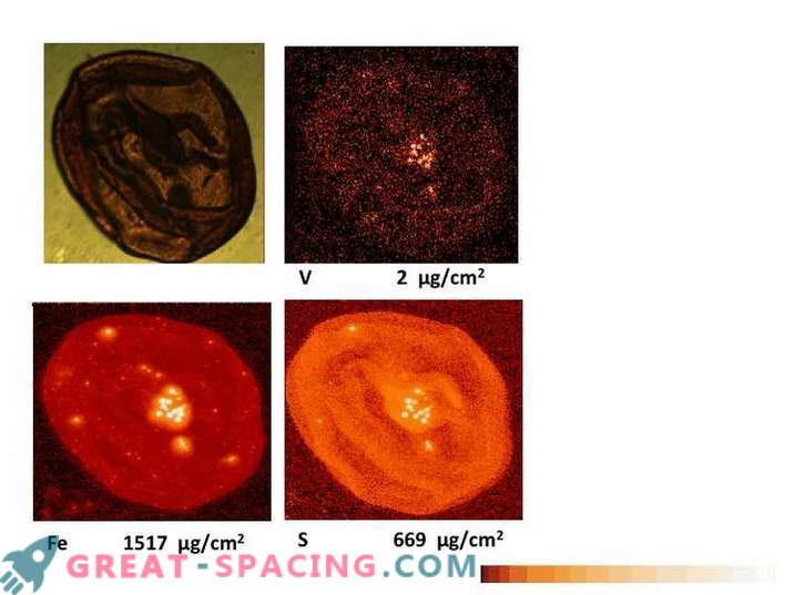 Vanadium helps to detect Martian life