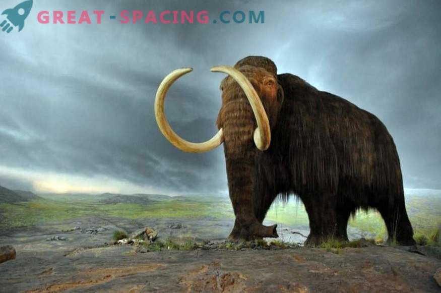 Could a comet 10,000 years ago have been able to destroy a megafauna